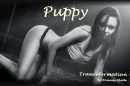 Shelle-Tranceformation-Puppy